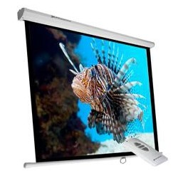 "Phoenix Technologies - PHPANTALLA-ELEC240 pantalla de proyección 3,43 m (135"") 1:1"